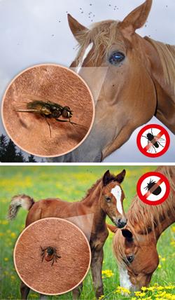 Zecken Pferd Mittel