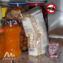 Mäuse aus den Wohnräumen vertreiben