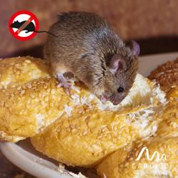 Mäuse fressen Lebensmittel in Speisekammern oder Kellern an