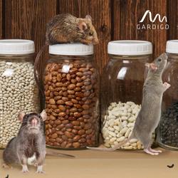 Mäuse im Keller befallen Lebensmittel