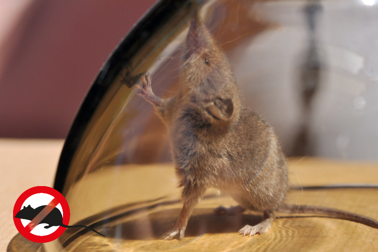 Mäuseplage im Spätsommer