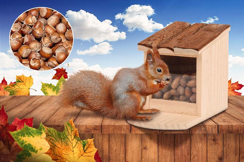 Eichhörnchen Futterhaus