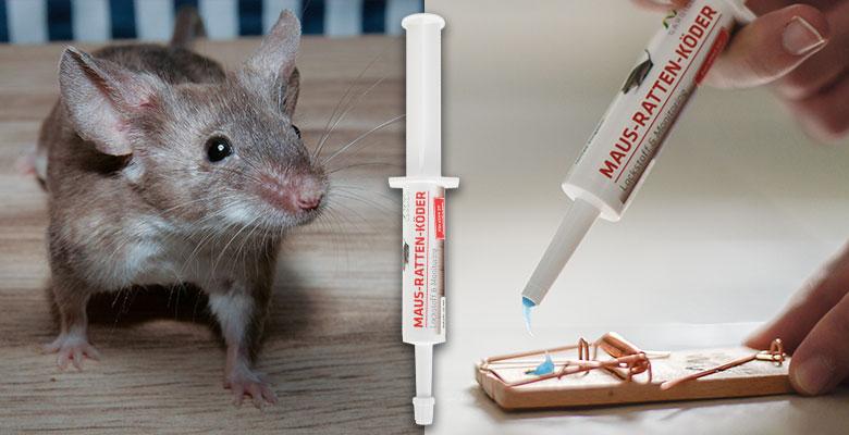 Maus Ratten Köder